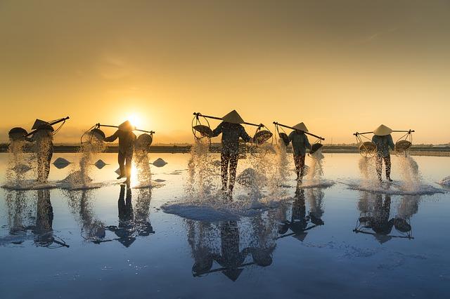 vietnamské pole