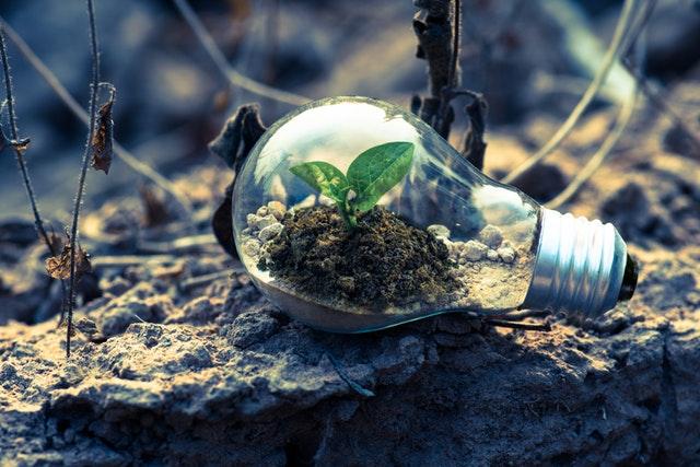 Žiarovka v prírode, umelecké, EKO.jpg